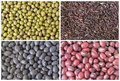Beans and grains collage red green black glutinous black rice grain closeup Stock Photo