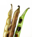 Beans in pods Royalty Free Stock Photos