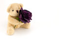 Bear hold a purple rose for an anniversary or Valentines Royalty Free Stock Photo