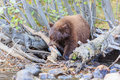 Bear lake tahoe photos taken in area Royalty Free Stock Photos