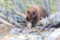 Bear lake tahoe photos taken in area Royalty Free Stock Image