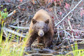 Bear lake tahoe photos taken in area Stock Photos