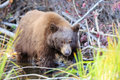 Bear lake tahoe photos taken in area Stock Image