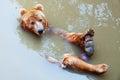 Bear river Royalty Free Stock Photos