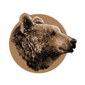 Bear sketch graphics