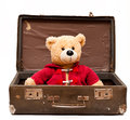 Bear in suitcase Royalty Free Stock Photos