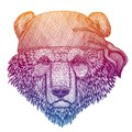 Bear. Wild pirate or biker. Vector animal portrait. Sailor, motorcyclist. Print for children clothing, tee. Kids fashion Royalty Free Stock Photo