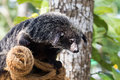 Bearcat relaxing day comfort for the winter in thailand Stock Photos