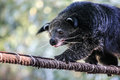 Bearcat relaxing day comfort for the winter in thailand Royalty Free Stock Photos