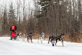 Beargrease mid distance brian bergen on trail grand marais mn january s team races along the during the portion of the john sled Stock Photo