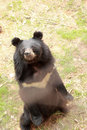 Bears Herd In The Nature
