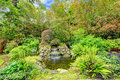 Beatiful exotic garden with pond landscape idea small man made waterfall and two decorative birds Stock Photos