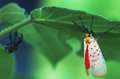 A beatiful insect on a leaf beautiful from the taihang mountain in china Royalty Free Stock Photo