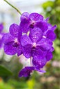 Beatiful orchid in the garden Stock Image