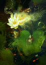 Beatiful white lotus blossom painting of single waterlily flower blooming on pond Stock Image