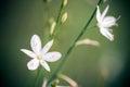 Beatiful wild flower in green meadow Stock Photography