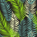 Beautifil Palm Tree Leaf  Silhouette Seamless Pattern Background Royalty Free Stock Photo