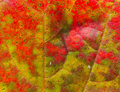 Beautiful abstract autumn maple leaf background Royalty Free Stock Photo
