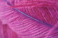 Beautiful abstract background with purple feather. Royalty Free Stock Photo