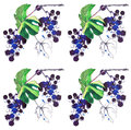 Beautiful abstract bright pattern of blue grapes and green leaves made with watercolors and pen with splashes and drops Royalty Free Stock Photo