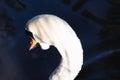 Beautiful abstract surreal white swan looking away at deep dark Royalty Free Stock Photo