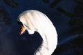 Beautiful abstract surreal white swan looking away at deep dark Royalty Free Stock Photo