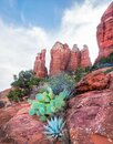 Beautiful Agave plant sprout from Cathedral Rock in Sedona,Arizona Royalty Free Stock Photo
