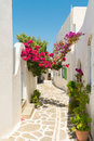 Beautiful alley with pink flowers at Prodromos local village of Paros island in Greece. Royalty Free Stock Photo