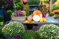 Vonkajšia jeseň kvetina dekorácie na stôl odlišný a oranžový tekvica biely mamičky chryzantéma kvety v košíky