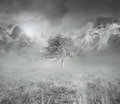 Beautiful artistic background representing isolated tree fog mountains cloudy sky background black white Royalty Free Stock Photography