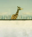 Beautiful artistic giraffe profile wall underneath sky skyline clouds background Royalty Free Stock Photo