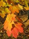 Beautiful autum leaves Stock Image