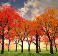 Beautiful autumn Royalty Free Stock Image