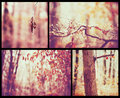 Beautiful autumn collage Royalty Free Stock Photography