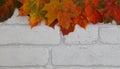 Beautiful Autumn colour maple leaf border on white brick background Royalty Free Stock Photo