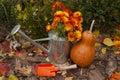Beautiful autumn composition in orange color