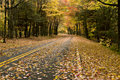 Beautiful Autumn Curved Road Stock Images