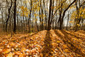 Beautiful autumn day in the forest Royalty Free Stock Photo