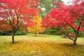 Beautiful Autumn Fall Nature I...