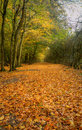 Beautiful Autumn Fall path through forest Royalty Free Stock Photos