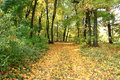 Beautiful autumn forest. Fall scene. Beautiful Autumnal park. Greenwood. Royalty Free Stock Photo
