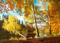 Beautiful autumn forest landscape. Fall in park Royalty Free Stock Photo