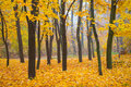 Beautiful autumn forest in the park with yellow and red trees Stock Photos