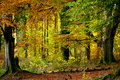 Beautiful autumn in the forest view of a trees Royalty Free Stock Photos