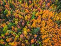 Beautiful autumn forest with yellow and red trees, aerial top view Royalty Free Stock Photo