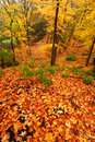 Beautiful autumn illinois landscape at rock cut state park in northern Stock Photos