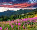 Beautiful autumn landscape in the mountains with pink flowers sunrise Stock Image
