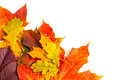 Beautiful autumn leaves with copy space for your text Royalty Free Stock Images