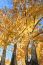 Beautiful autumn leaves glowing in the sun Stock Image