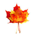 Beautiful autumn leaves on white background Stock Photography